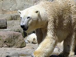 erleben Sie mit Martina Sellmer Tiere im Zoo